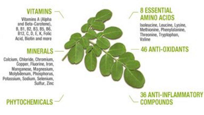 Moringa – The Amazing Benefits of Moringa