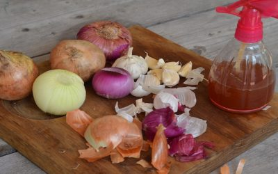 10 Amazing Benefits of Healing Onion Skins